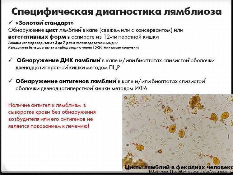 комаровский о лямблиях