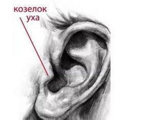 Сильно болит козелок уха при надавливании