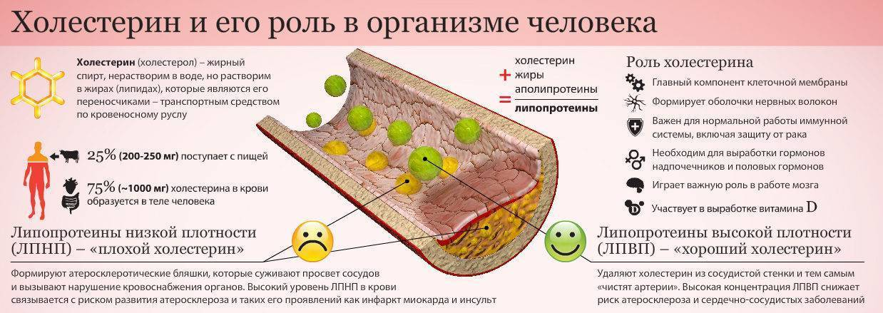 холестерин высокой и низкой плотности