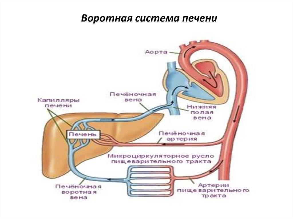 Причины и лечение тромбоза воротных вен