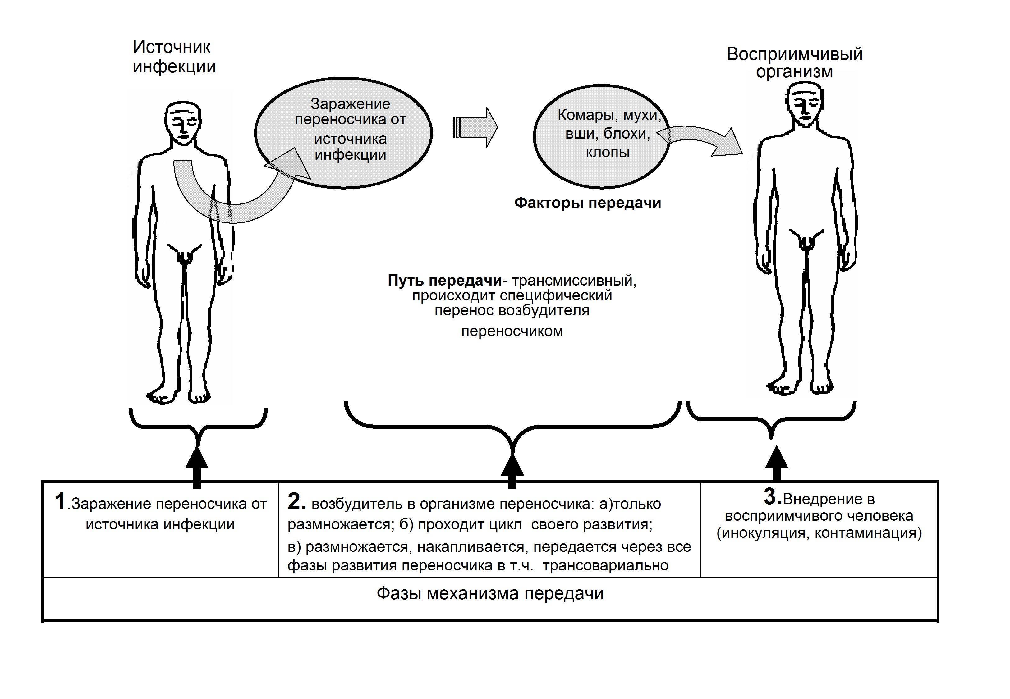 Трансмиссивные болезни
