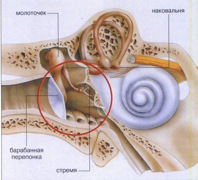 Лабиринтит - причины, симптомы, виды, диагностика, лечение, профилактика