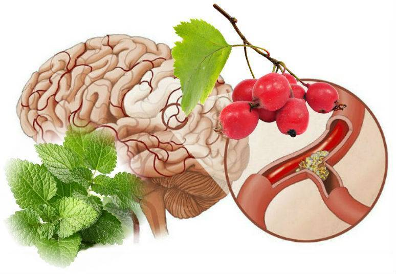 Питание при атеросклерозе сосудов нижних конечностей