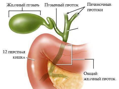 Печень и желчный пузырь симптомы лечение