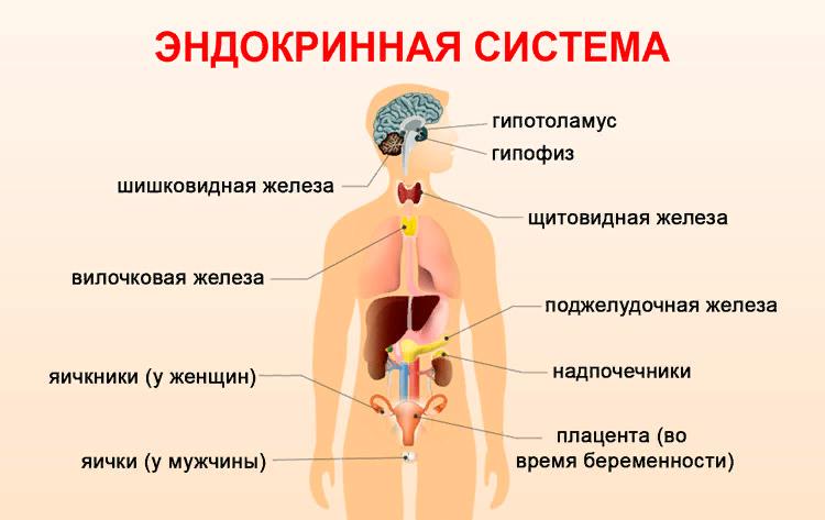 признаки нарушения эндокринной системы у женщин