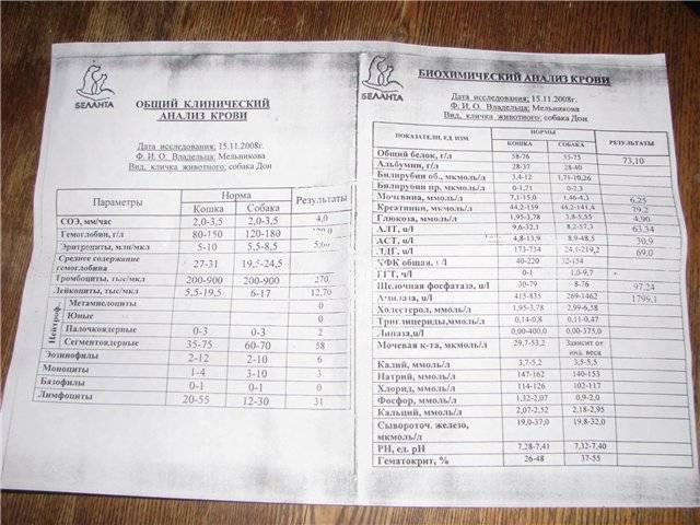Что показывает анализ крови при псориазе