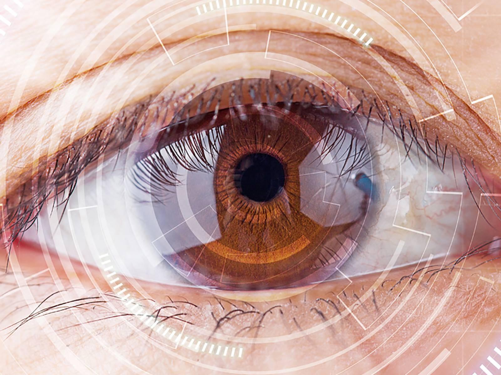 Функции и строение колбочек и палочек сетчатки глаза