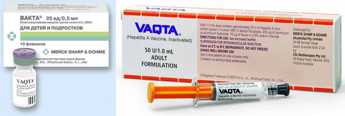 Прививки от гепатита а: схема вакцинации, побочные действия, противопоказания, отзывы