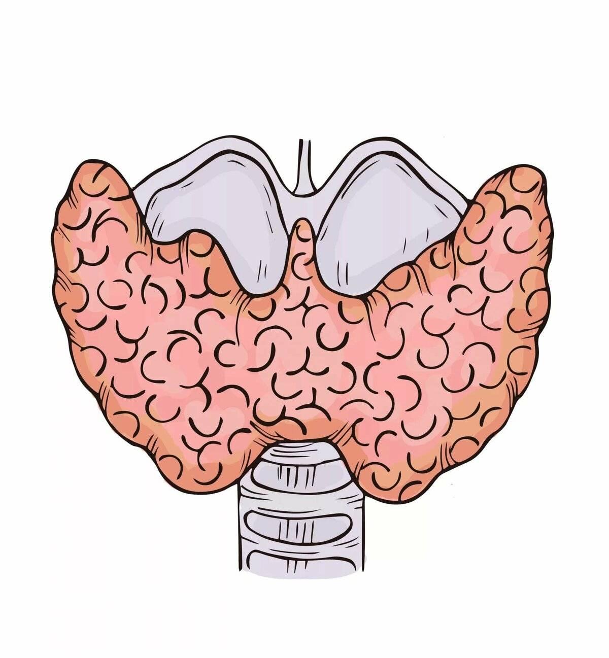 щитовидная железа и старение