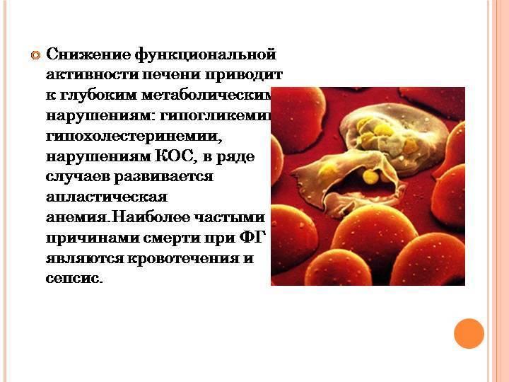 Причины, методы лечения и профилактика фульминантного гепатита