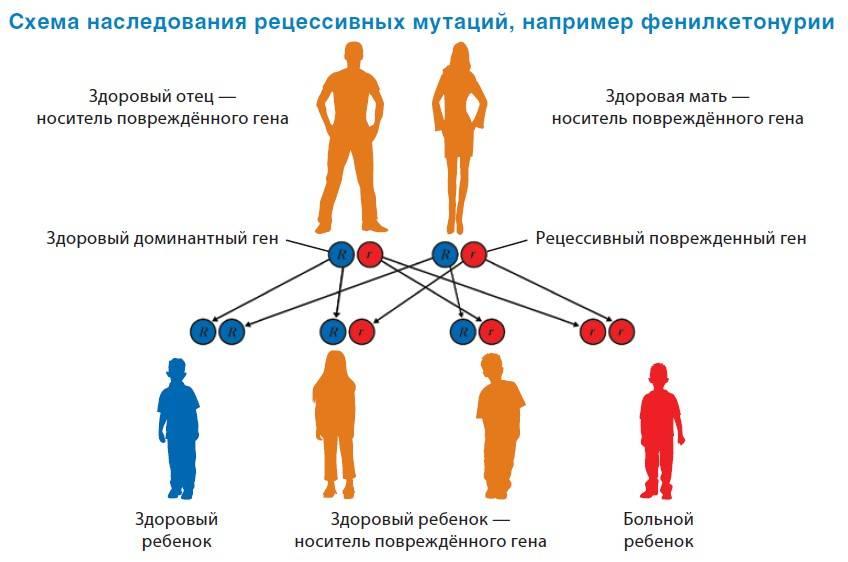 Передается ли алкоголизм по наследству - влияние генетической предрасположенности на возникновение зависимости