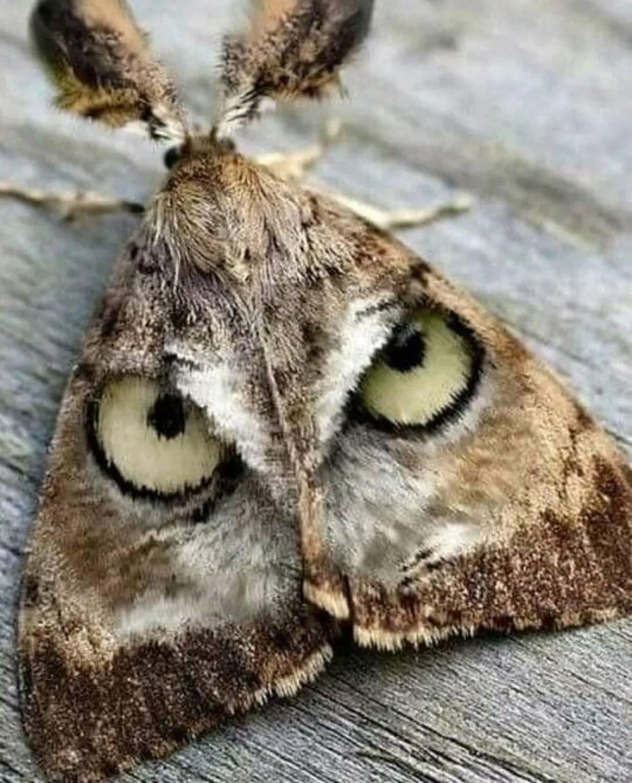 Боязнь бабочек, вешaлок и другие самые странные фобии знаменитостей