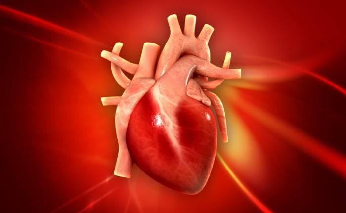 Паразиты живущие в сердце человека: симптомы, фото