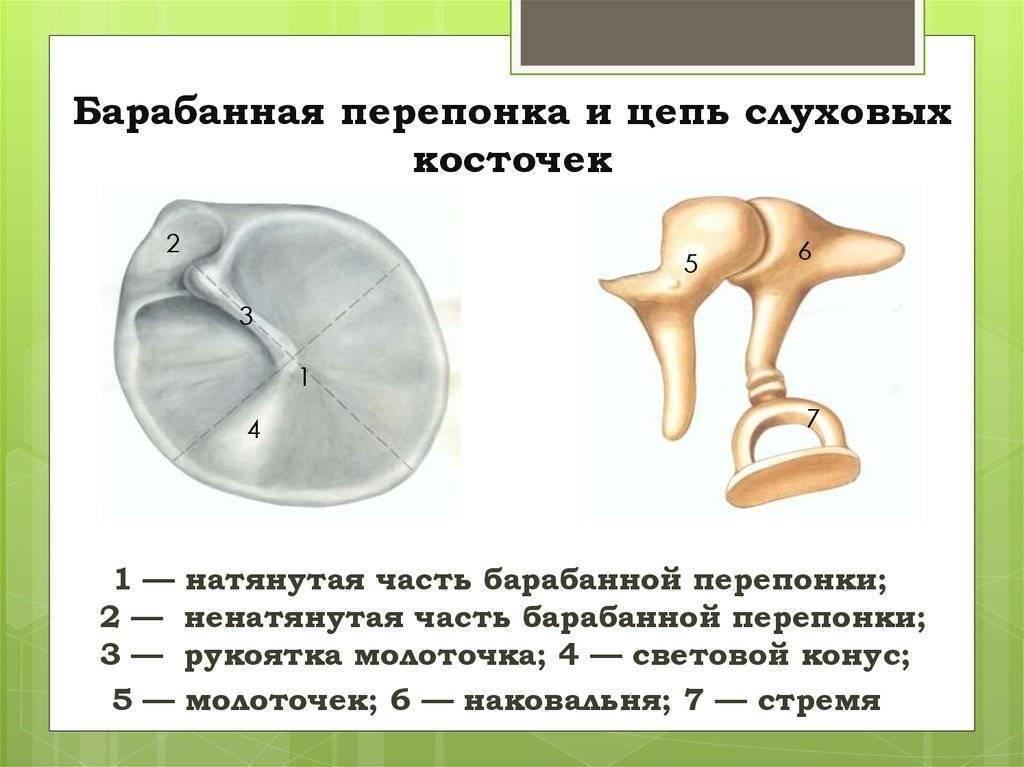 Повреждения барабанной перепонки: причины и формы, проявления, диагностика, лечение