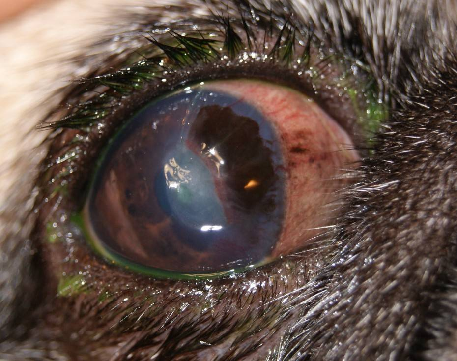 воспаление роговицы глаза лечение