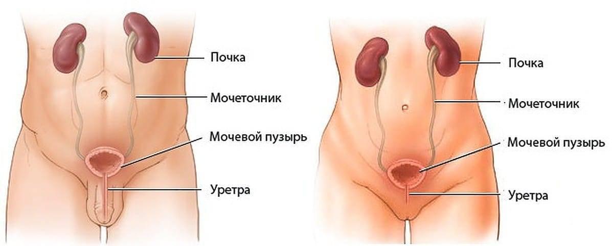 Цистит и пиелонефрит: в чем отличия?
