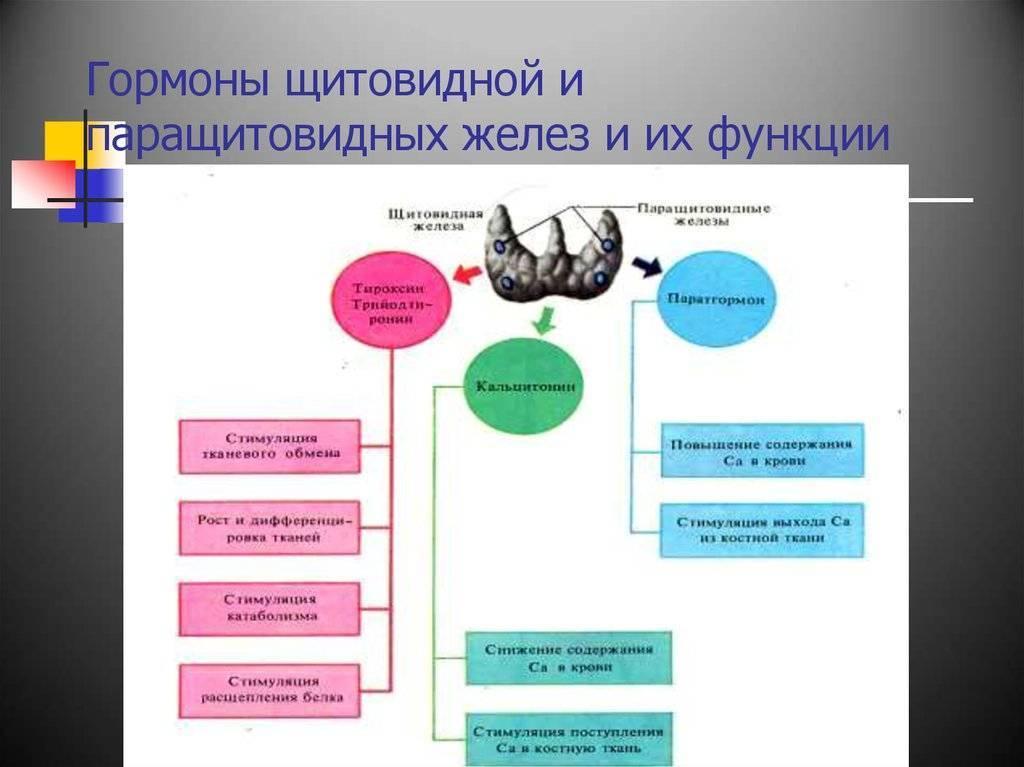 гормон паращитовидной железы