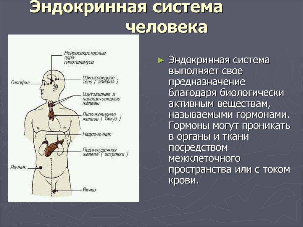Симптомы нарушений эндокринной системы