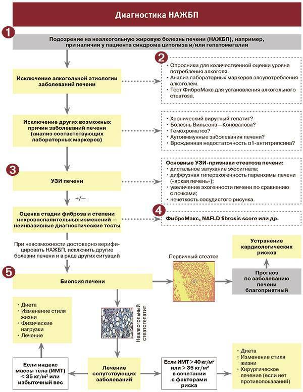 Неалкогольная жировая болезнь печени: код по мкб 10, симптомы и клинические рекомендации