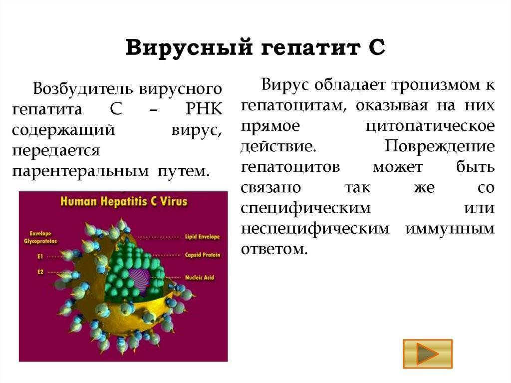 вирусный гепатит c