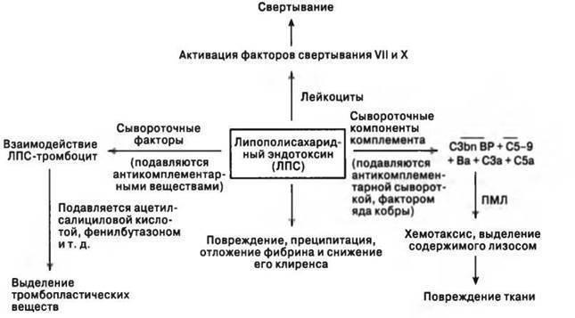 Геморрагическая болезнь новорожденных