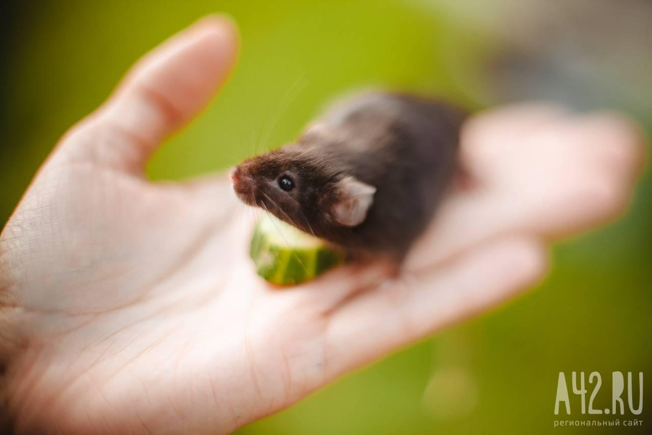 боязнь крыс фобия