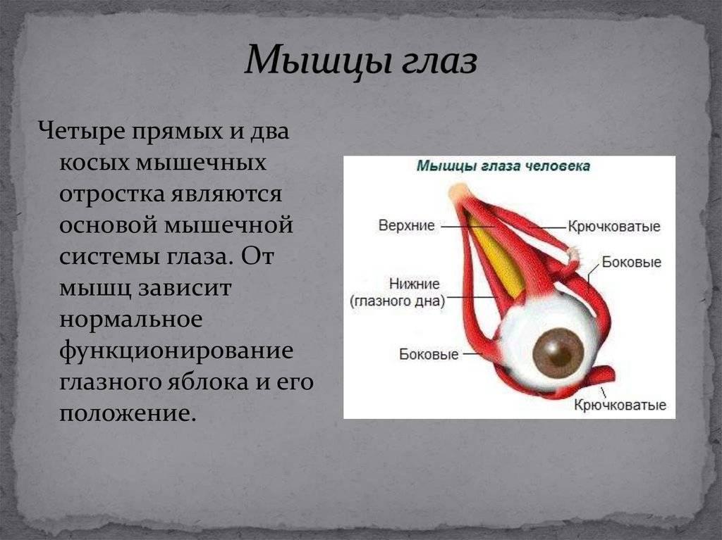 Анатомия : мимические мышцы или мышцы лица. мышцы окружности глаз. мышцы окружности рта. мышцы окружности носа.