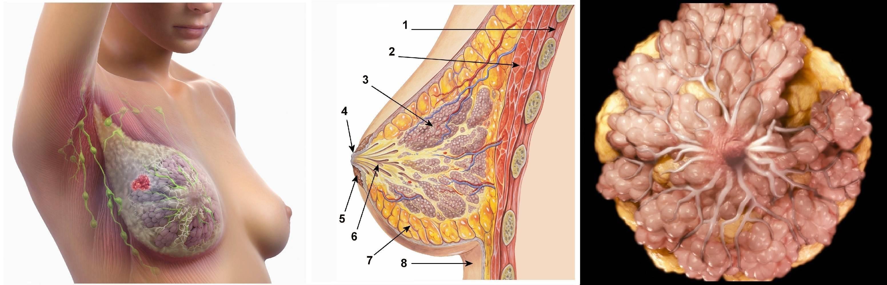 """""""мастопатия — виды заболевания, симптомы и методы лечения"""""""