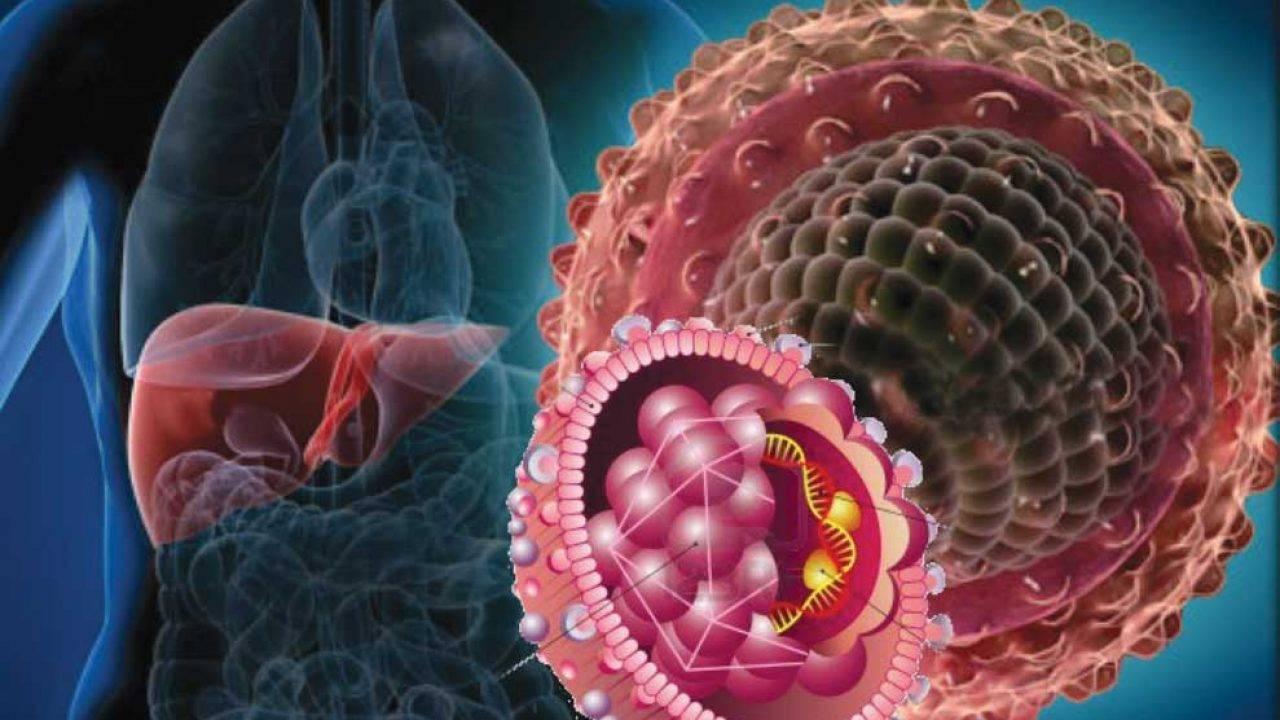 Что такое носительство гепатита с