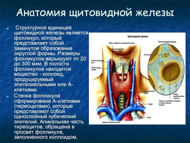 Гипертрофия фолликулов щитовидной железы | про щитовидку