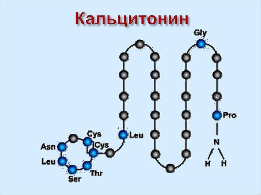 кальцитонин норма в крови
