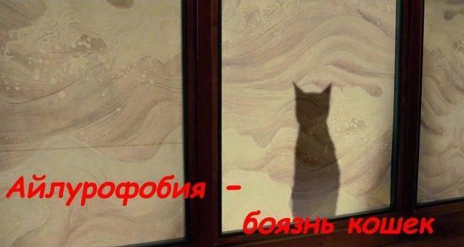 Фобии человека