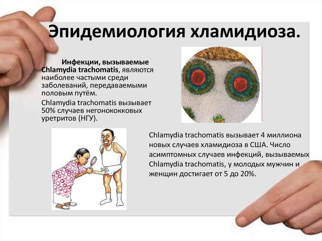 Респираторный хламидиоз: причины, симптомы и лечение | все о паразитах