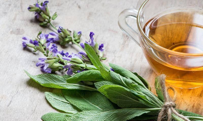 Шалфей от кашля: эффективные рецепты и противопоказания