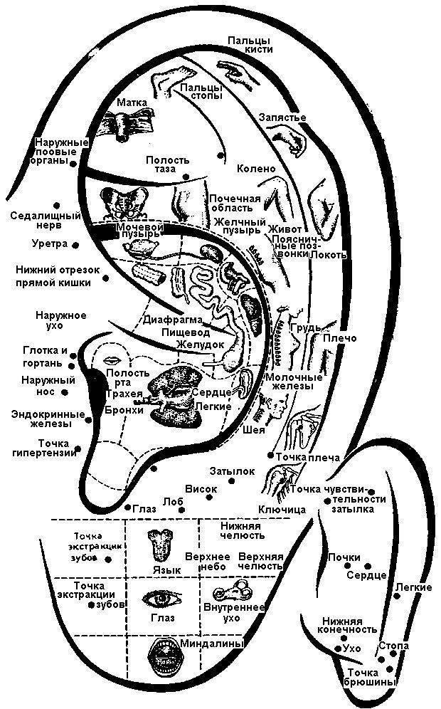 Массаж ушей – как делать, активные точки на ушных раковинах, акупунктура уха, диагностика