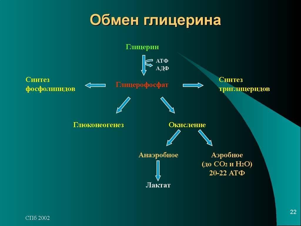 Процесс синтеза липидов