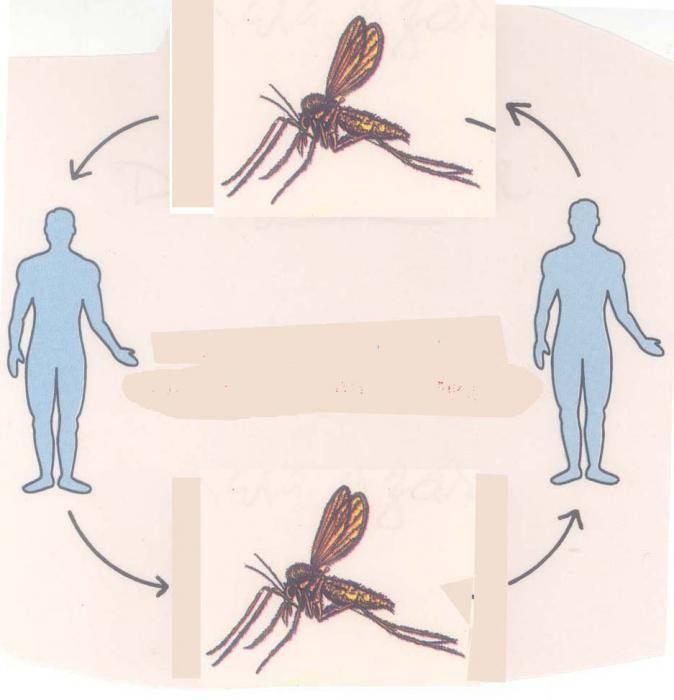 трансмиссивные инфекции
