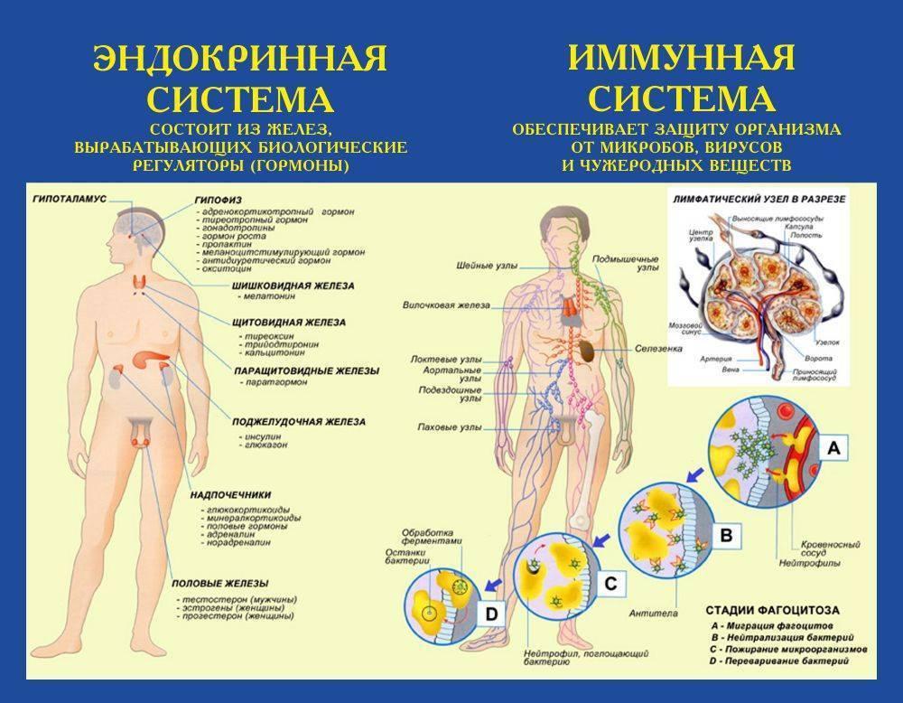 Симптомы, определяющие болезни эндокринной системы
