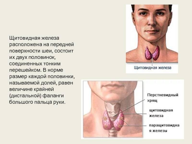 пульсирует щитовидная железа