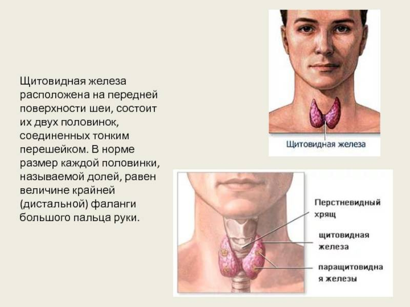 щитовидная железа норма у мужчин