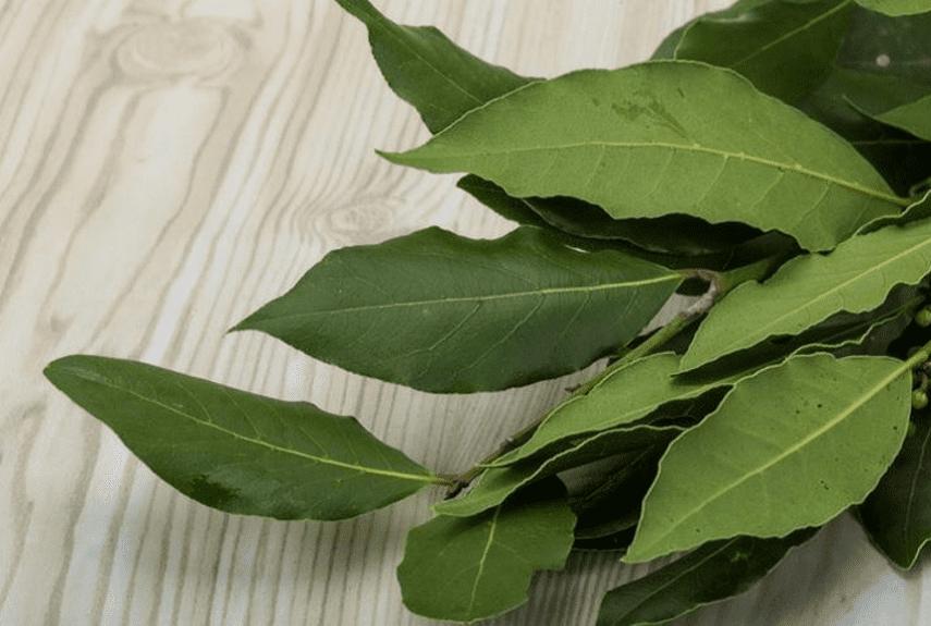 Эффективное лечение гайморита лавровым листом