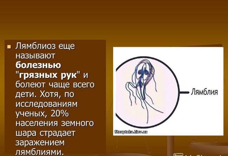 Лямблии у детей: симптомы и лечение, доктор комаровский