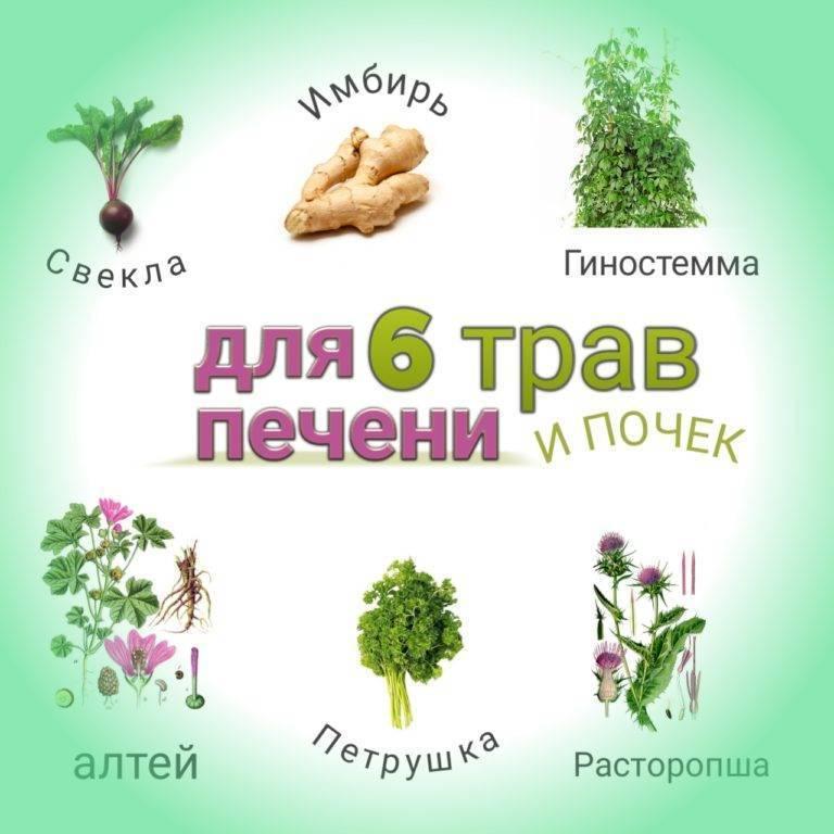Травы для лечения печени - лучшие средства для печени