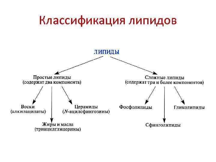 Липиды: функции, классификация