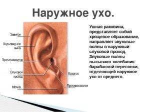 У ребенка болит ухо при надавливании на козелок уха