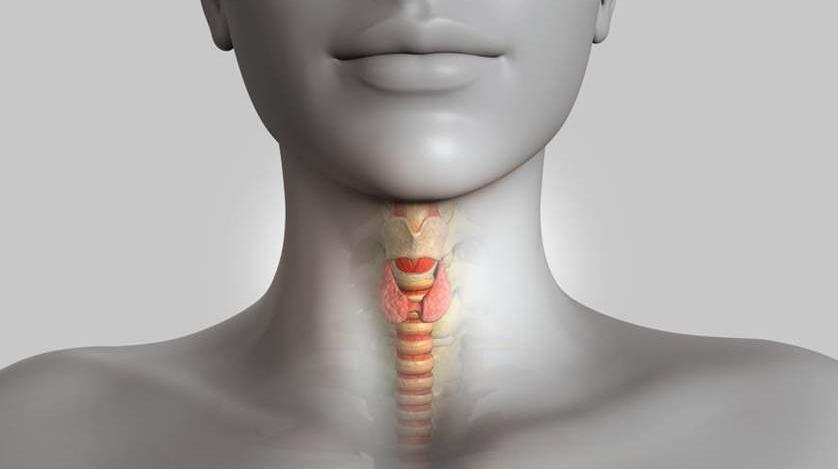 от чего появляется щитовидная железа