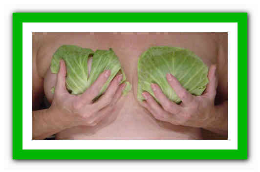 Лечение капустным листом молочной железы