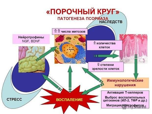 этиология и патогенез псориаза