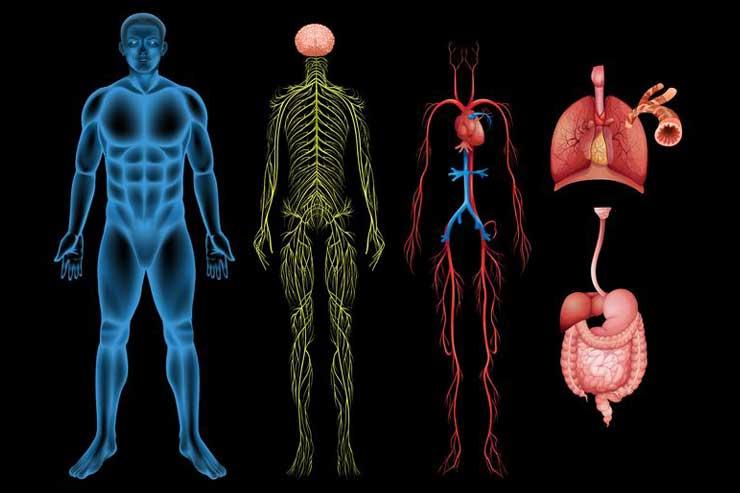 соматоформная дисфункция вегетативной нервной системы симптомы