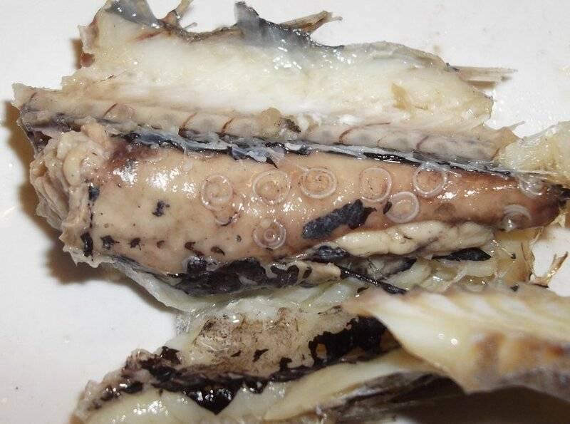 солитер червь